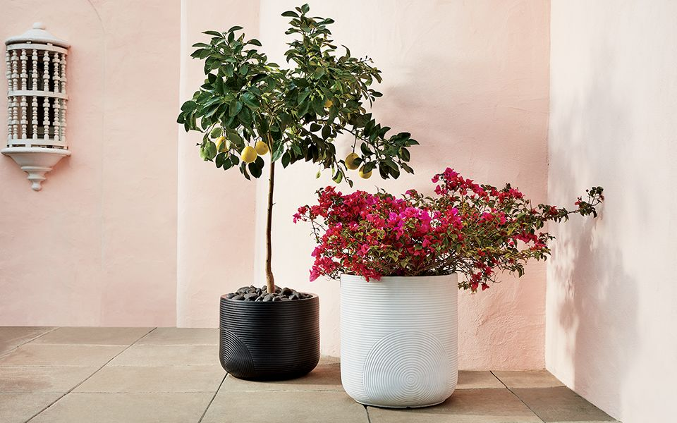 Planter Advice You'll Dig: House Plant Ideas for Indoors and Outdoors