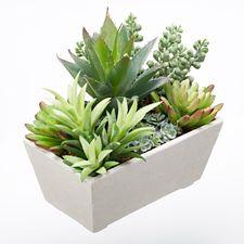 plantes succulentes avec pot rectangulaire en ciment danson canadian tire. Black Bedroom Furniture Sets. Home Design Ideas