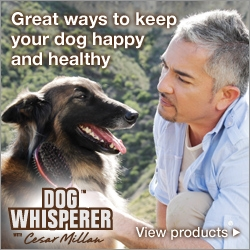 Great ways to keep your dog happy and healthy. Dog Whisperer with Cesar Millan
