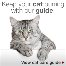 Keep your cat purring with our guide. View cat care guide.