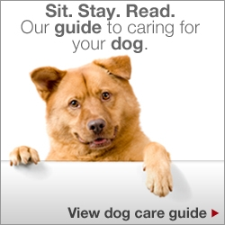 Sit.Stay.Read. Our guide to caring for your dog. View dog care guide.