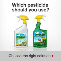 Which pesticide should you use?