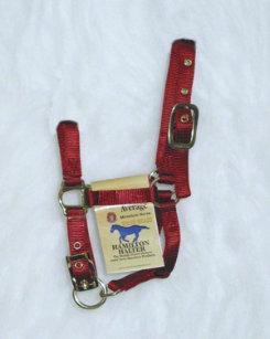Hamilton Miniature Horse Halter Best Price