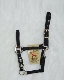 Hamilton Weanling Halter with Adjustable Chin and Snap Best Price