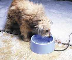 Allied Precision Inc. Plastic Heated Pet Bowl Best Price