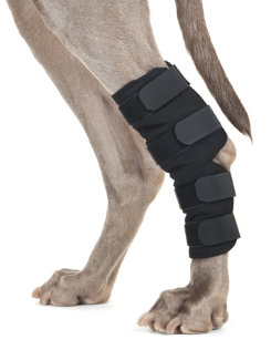 Back On Track Therapeutic Dog Hock Wraps Best Price
