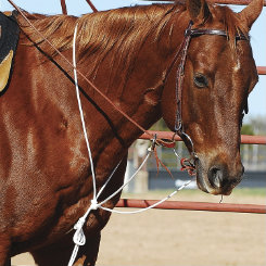 Cashel String Martingale Best Price