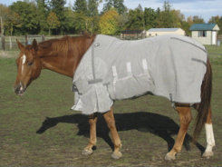 Cashel Crusader Fly Sheet Best Price