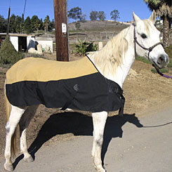 CoolMedics Cooling Equine Full Horse Blanket Best Price