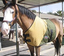 CoolMedics Cooling Equine Half Horse Blanket Best Price
