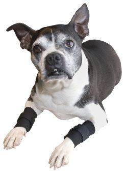 Draper Canine Therapy Doggie Wraps Best Price