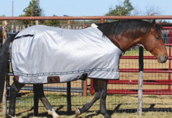Classic Equine Fly Sheet Best Price
