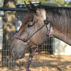 Classic Equine Nylon Rope Halter Best Price
