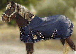 EOUS Pony Heavyweight Turnout Blanket Best Price