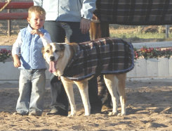 EOUS Dog Fleece Plaid Rug Best Price