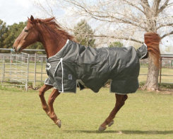 EOUS Apollo Lightweight Turnout Blanket Best Price