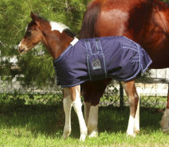 EOUS Heavy Weight Foal Rug Best Price