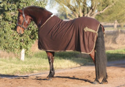 EOUS Wool Show Rug Best Price
