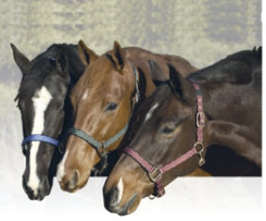 Equi-Star Breakaway Halter Best Price