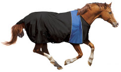 Ovation Athletic Stretch Horse Blanket Best Price
