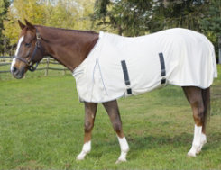 Centaur Got Flies? Creamed Fly Sheet with Belly Guard Best Price
