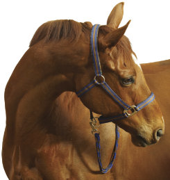 Centaur Breakaway Halter and Lead Rope Set Best Price
