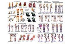 Conformation and Anatomy Chart by Susan Hakola