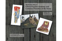 Equine Anatomy Volume 1 by Ronald Riegel