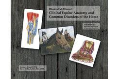 Equine Anatomy Volume 1 by Ronald Riegel Best Price