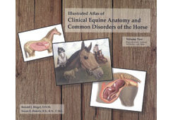 Equine Anatomy Volume 2 by Ronald Riegel