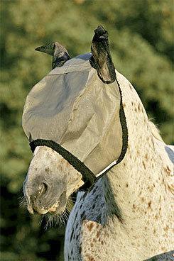 Horseware Rambo Flymask Best Price