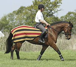 Rambo Newmarket Competition Sh Best Price