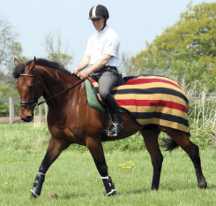 Rambo by Horseware Newmarket Competition Sheet