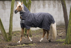 Amigo by Horseware Hero-6 Plus Medium Weight Turnout Horse Blanket Best Price