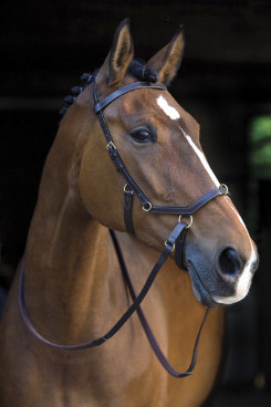 Rambo by Horseware Micklem MultiBridle