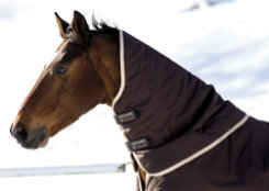 Rambo by Horseware Duo Neck Cover Best Price