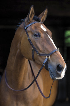Rambo by Horseware Micklem Rubber Reins Best Price