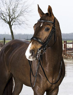 Horze Weymouth Bridle Best Price