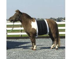 Intrepid Miniature Horse Belly Sweat Best Price