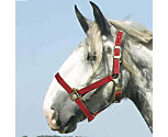 Intrepid Draft Horse Economy Halter