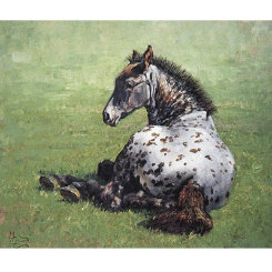 Appaloosa Foal Art Print by Malcom Coward Best Price