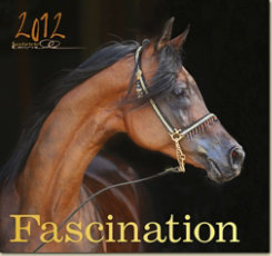 Boiselle Fascination Art Calendar 2012 Best Price