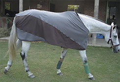 TuffRider Stretch Cotton Horse Stable Sheet Best Price