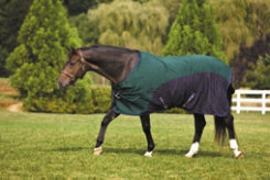 TuffRider 600D Stretch Manager Pony Turnout Sheet Best Price
