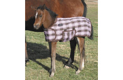 Tuffrider Thermo Manager Lined Foal Blanket Best Price