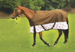 Equine Couture Ashley Turnout Horse Sheet Best Price