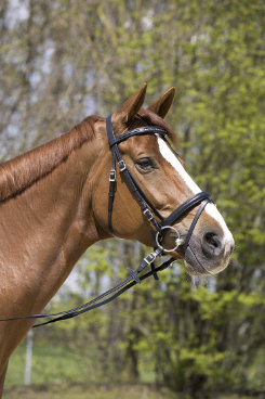 Kieffer Betty Snaffle Bridle with Crank Flash Best Price