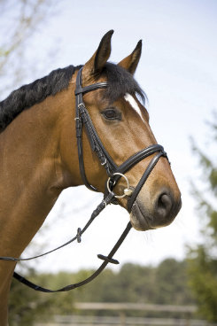 Kieffer Dagmar Soft Snaffle Bridle with Flash Best Price