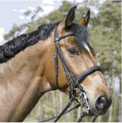 Kieffer Carolina Double Bridle Best Price