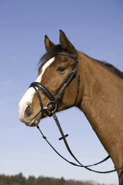 Kieffer Salome II Double Bridle Best Price